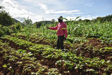 Zukunft nachhaltige Landwirtschaft